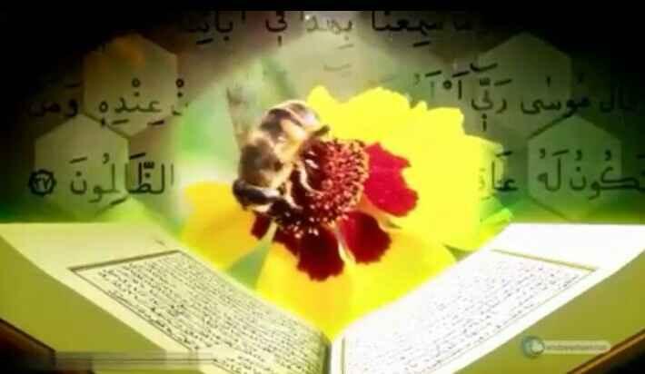 عسل در قرآن