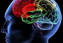 تقویت کننده های عقل در طب اسلامی